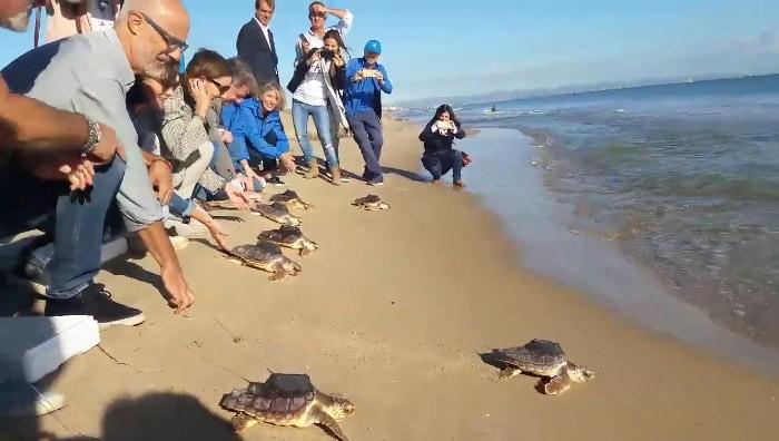 Solten en el Saler deu tortugues dels ous de les Palmeres criades a l'Oceanogràfic