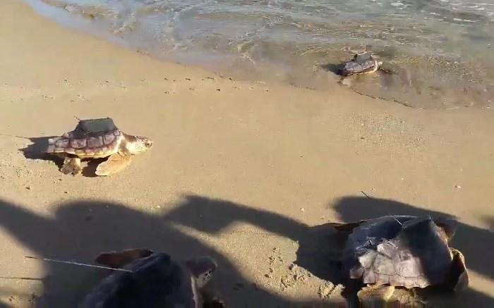 solta-tortugues-la-punta-19-oct-2017_2