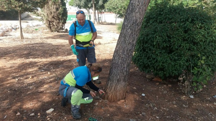 Almussafes tracta més de 150 pins contra plagues com la processionària