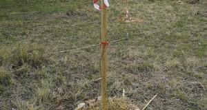 Plantada arbres assut de Sueca_3