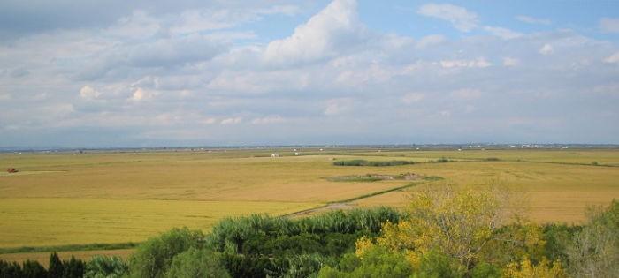 Projecte pilot per a reduir els nitrats de les aigües a partir de la palla de l'arròs