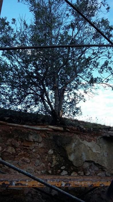 cementeri-cullera-arbre