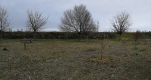 Plantada arbres assut de Sueca_2