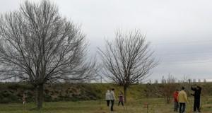Plantada arbres assut de Sueca_4