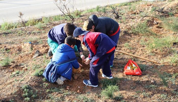 Escolars de Cullera celebren el Dia de l'Arbre reforestant l'Alt del Cabeçol