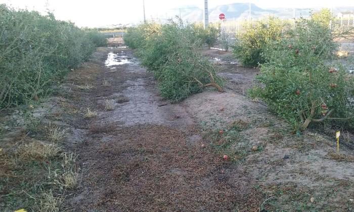 El PP demana al Govern solucions per a l'agricultura de la Ribera afectada pel temporal de juliol