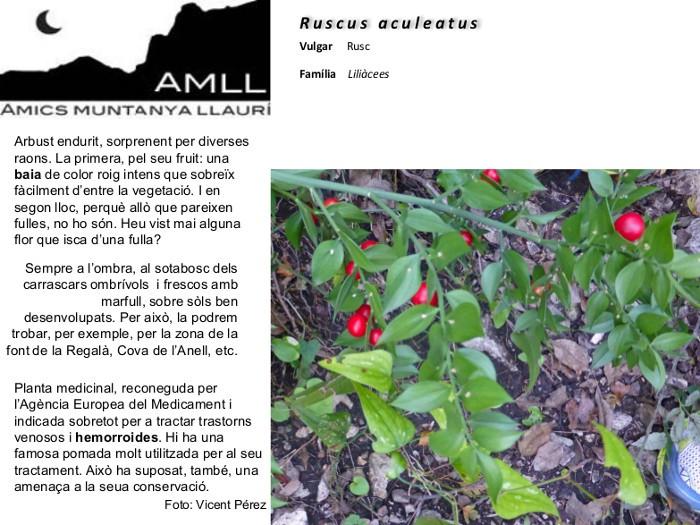 06-Ruscus aculeatus