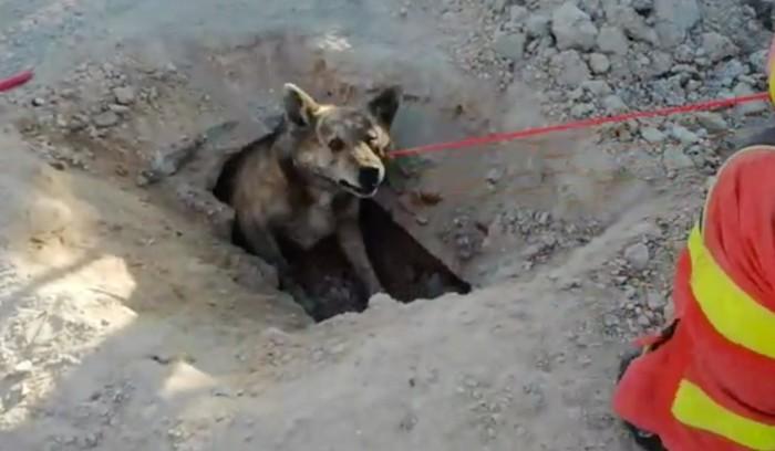 Rescaten un gos atrapat en una canonada subterrània de Cullera