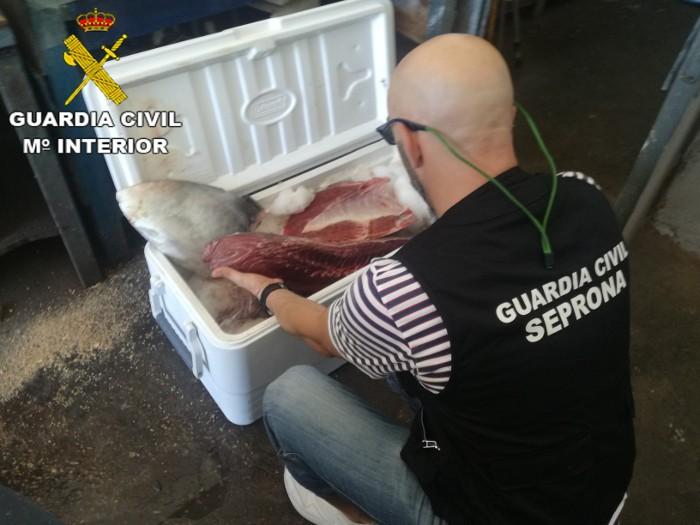 La Guàrdia Civil investiga a tres persones per la pesca il·legal de tonyina roja al Perelló