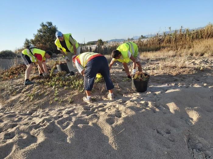 sueca-neteja-dunes-estiu-2019