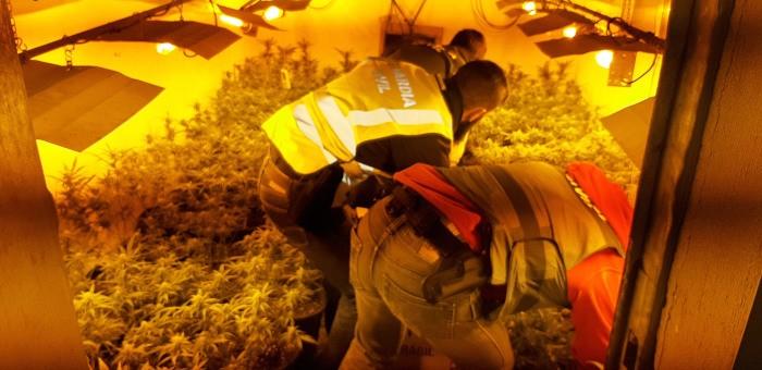 La Guàrdia Civil descobreix a Sueca 500 plantes de marihuana camuflades darrere d'una falsa paret en una nau